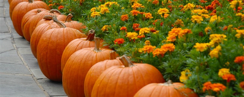 4 Fantastic Fall Themes to Use for Marketing Your Business